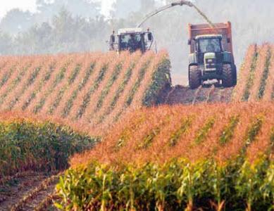 Maisprodukte aus CH-Produktion